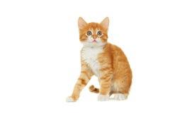Vista do gatinho Fotos de Stock Royalty Free