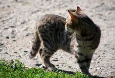 Vista do gato Fotos de Stock Royalty Free