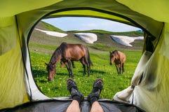 Vista do interior de uma barraca nos cavalos e nas montanhas Imagens de Stock Royalty Free