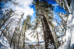 Opinião do Mt. Boémia Foto de Stock Royalty Free