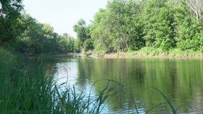 Vista do lago e da floresta através da grama litoral vídeos de arquivo