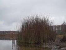 Vista do lago em um dia chuvoso do outono vídeos de arquivo