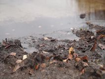 Vista do lago em um dia chuvoso do outono video estoque