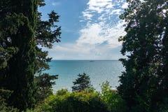Vista do mar calmo através das árvores antigas O Mar Negro, Sochi fotos de stock