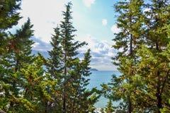 Vista do mar da montanha, onde os pinheiros crescem montenegro O Budva Riviera Becici imagem de stock royalty free