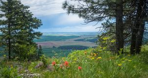 Vista do Palouse, da parte superior do montículo de Kamiak Foto de Stock Royalty Free