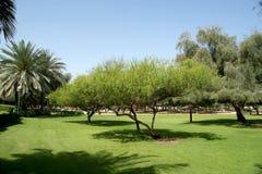 Vista do parque bonito em Dubai, UAE Praia e parque de Mamzar do Al Fotografia de Stock Royalty Free