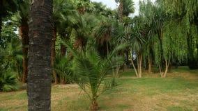 Vista do parque com palmeiras no centro da cidade 4K video estoque