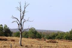 A vista do parque nacional do pench, madhyapradesh, india, área dos tigeress nomeou o langdi foto de stock