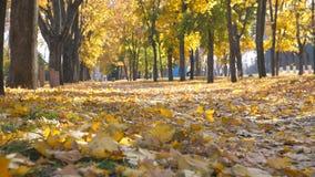 Vista do parque vazio da cidade no dia ensolarado do outono Da cor da folha queda lentamente a moer As folhas de bordo amarelas e video estoque