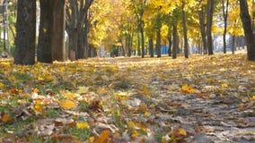 Vista do parque vazio da cidade no dia ensolarado do outono Da cor da folha queda lentamente a moer As folhas de bordo amarelas e vídeos de arquivo