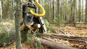 A vista do registador reduziu a árvore e os seus ramos video estoque