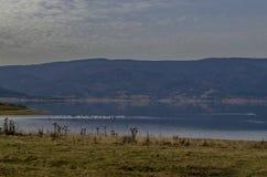 Vista do reservatório da represa de Batak com a clareira litoral do outono, floresta, monte nas montanhas de Rhodope e nos pássar imagem de stock royalty free
