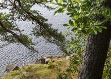 Vista do rio atrás das árvores foto de stock