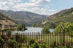Vista do rio, das propriedades, e dos vinhedos de Douro Imagem de Stock Royalty Free