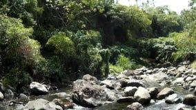 Vista do rio rochoso frio e limpo da água natural, repleto com vegetação natural filme