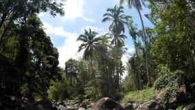 Vista do rio rochoso frio e limpo da água natural, repleto com vegetação natural video estoque