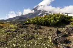 Vista do stratovolcano Volcano Koryaksky, península de Kamchatka, Rússia fotografia de stock