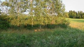 Vista do trem que move-se através dos campos de grama video estoque