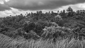Vista do vale com selva da palmeira foto de stock