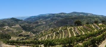 Vista do vale de douro, Portugal Imagem de Stock