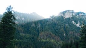 Vista do vale de Koscielisko em Tatras polonês Foto de Stock