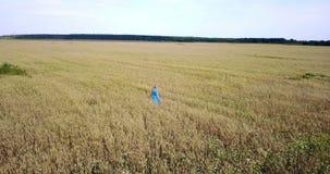 A vista do zangão na jovem mulher feliz com um cabelo justo longo e em um vestido azul vai através do campo do trigo maduro a vídeos de arquivo