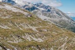 Vista dos cumes em Áustria Foto de Stock