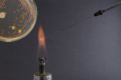 A vista dos microbiologist's eye no laço na chama durante a passagem Fotos de Stock Royalty Free