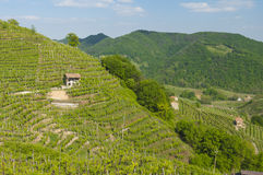 Vista dos vinhedos de Valdobbiadene, Itália durante a mola Imagem de Stock