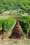 Vista dos vinhedos e de pomares verde-oliva na ilha do vis na Croácia, Europa, em um dia de verão imagens de stock