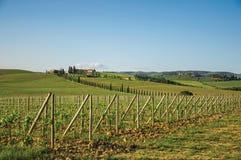 Vista dos vinhedos e do monte com a casa de campo na parte superior, no por do sol no campo de Tuscan Fotos de Stock