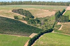 Vista dos vinhedos perto de Somerset West, África do Sul Imagens de Stock
