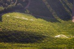 Vista dos vinhedos perto de Somerset West, África do Sul Imagem de Stock Royalty Free