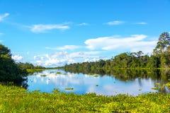 Vista e riflessione della giungla di Amazon Fotografia Stock Libera da Diritti