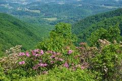 Vista eccezionale dell'alloro di montagna, del rododendro di Catawba e di Shenandoah Valley Immagini Stock Libere da Diritti