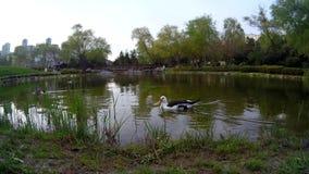 Vista ed anatre del lago archivi video