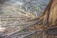 Vista el raíces del árbol fotos de archivo