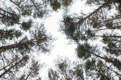 Vista em direção ao céu às partes superiores da árvore imagens de stock royalty free