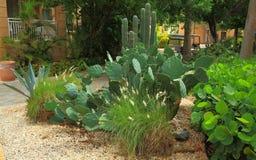 Vista em tipos diferentes de planta do cacto Fotografia de Stock