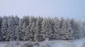 Vista em torno do inverno Forest From The Top On vídeos de arquivo