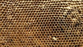 Vista em um favo de mel, close-up imagem de stock