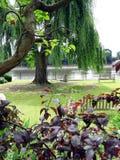Vista em um jardim Fotos de Stock