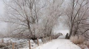 Vista em uma ponte de madeira pequena no inverno Imagem de Stock Royalty Free