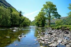 Vista ensolarado cênico ao longo de um rio calmo com uma árvore distintiva em um banco imagens de stock