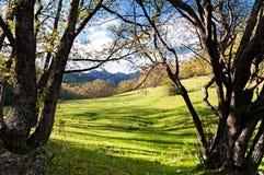 Vista entre as árvores no vale Foto de Stock Royalty Free