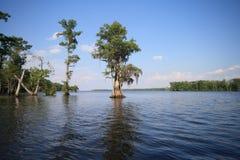 Vista escénica de árboles en pantano Fotografía de archivo libre de regalías