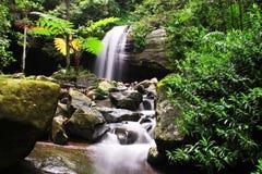 Vista escénica de la cascada en medio de las plantas Fotos de archivo