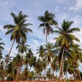 Vista escénica de la granja del coco contra el cielo fotos de archivo libres de regalías