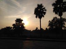Vista escénica de la tarde y de las palmeras de la oscuridad Imagen de archivo libre de regalías